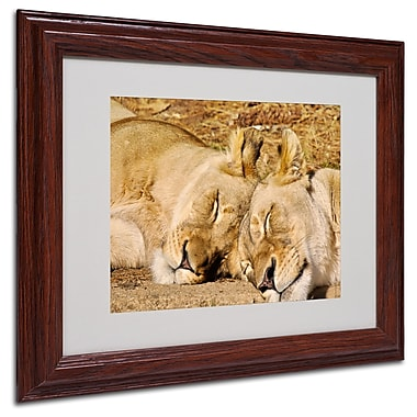 CATeyes 'National Zoo-Lions' Matted Framed Art - 11x14 Inches - Wood Frame