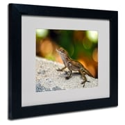 Trademark Fine Art CATeyes 'Virgin Islands 4' Matted Art Black Frame 11x14 Inches