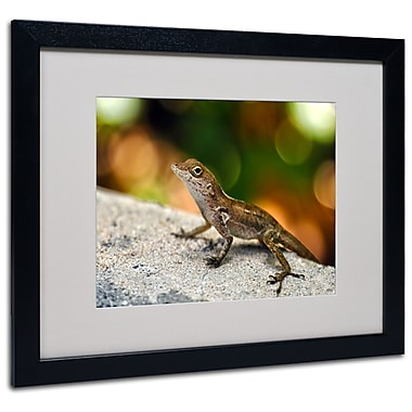 Trademark Fine Art CATeyes 'Virgin Islands 4' Matted Art Black Frame 16x20 Inches