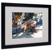 Trademark Fine Art CATeyes 'Virgin Islands 6' Matted Art Black Frame 16x20 Inches