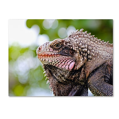 Trademark Fine Art CATeyes 'Virgin Islands 9' Canvas Art 30x47 Inches