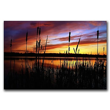 Trademark Fine Art Principles by CATeyes Canvas Art Ready to Hang 22x32 Inches