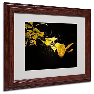 Philippe Sainte-Laudy 'Golding' Matted Framed Art - 11x14 Inches - Wood Frame
