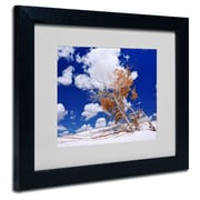 Trademark Fine Art Philippe Sainte-Laudy 'Burn Tree' Matted Art Black Frame 11x14 Inches