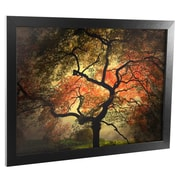 Trademark Fine Art Philippe Sainte-Laudy 'Japanese' Matted Art Black Frame 11x14 Inches