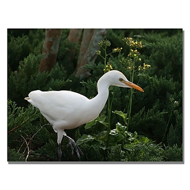 Trademark Fine Art Patty Tuggle 'Egret' Canvas Art 24x32 Inches