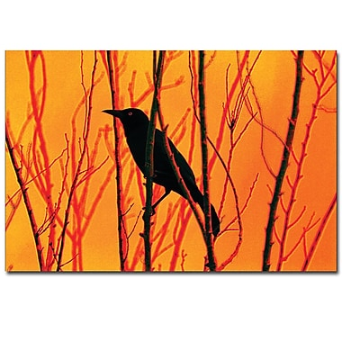Trademark Fine Art Patty Tuggle 'Blackbird Dreams' Canvas Art