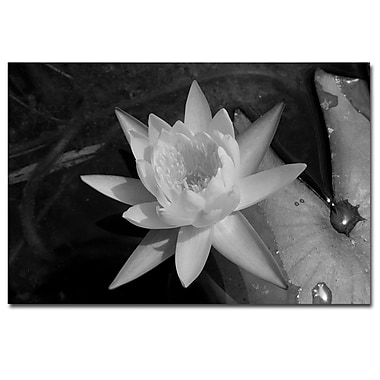 Trademark Fine Art Water Lilly by Patty Tuggle Ready To Hang Art