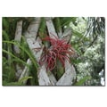 Trademark Fine Art Air Plant in Pink by Patty Tuggle Ready To Hang Art