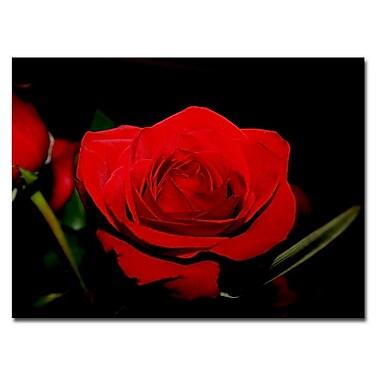 Trademark Fine Art Red Velvet by Patty Tuggle Ready To Hang Art