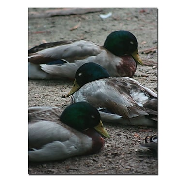 Trademark Fine Art Duck Slumber by Patty Tuggle-Canvas Art