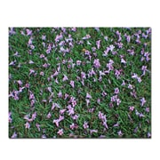Trademark Fine Art Fallen Flowers by Patty Tuggle-Canvas Art