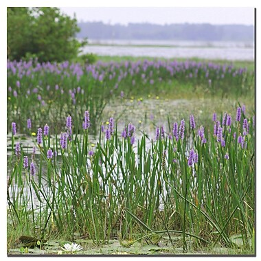 Trademark Fine Art Patty Tuggle 'Floral Lake' Canvas Art