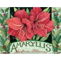 LANG® Amaryllis Boxed Holiday Cards