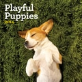 Avalanche® Playful Puppies 2014 Wall Calendar, 12in. x 12in.