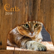 Avalanche® Cats 2014 Wall Calendar, 12 x 12