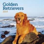 Avalanche® Golden Retrievers 2014 Wall Calendar, 12 x 12