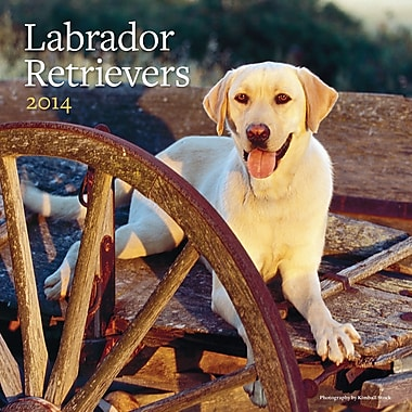 Avalanche® Labrador Retrievers 2014 Wall Calendar, 12in. x 12in.