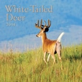 Avalanche® White Tailed Deer 2014 Wall Calendar, 12in. x 12in.