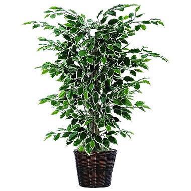 Vickerman 4' Artificial Ficus Bush In Decorative Rattan Basket, Dark Green/Variegated
