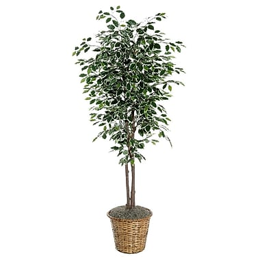 Vickerman 6' Variegated Ficus Deluxe Tree In Dark Brown Rattan Basket, Green/White