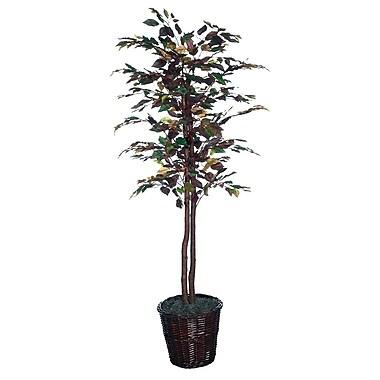 Vickerman 6' Mystic Ficus Tree With Dark Brown Rattan Basket & Natural Hardwood Trunks