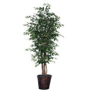 Vickerman 6' Artificial Ficus Executive Tree With Real Draonwood Trunks & Rattan Container