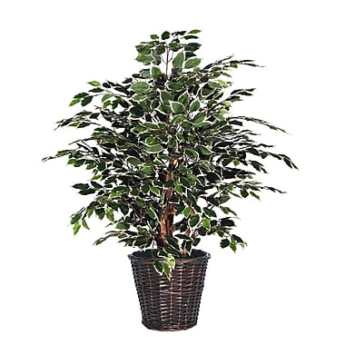 Vickerman 4' Variegated Ficus Extra Full Bush On Dragonwood Trunks With Rattan Container, Dark Green
