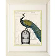 """Diamond Decor High Quality Framed """"Peacock Birdcage II"""" Print Art, 22"""" x 28"""""""