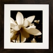 Diamond Decor in.Bronze Lily #1in. Framed Art, 26in. x 26in.