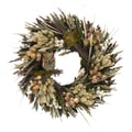 The Christmas Tree Company Autumn Night Owl 16in. Dried Floral Wreath