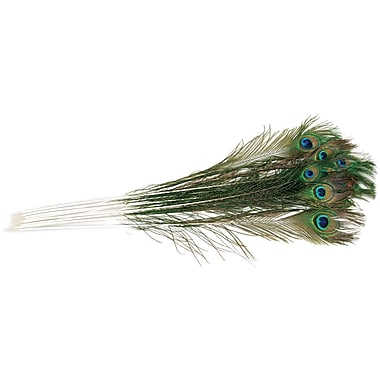 Zucker B458/12 Multicolor Natural Peacock Eye Feathers, 12/Pack