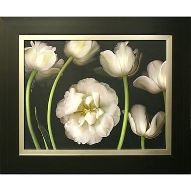 Tulip Garden Framed by Pip Bloomfield