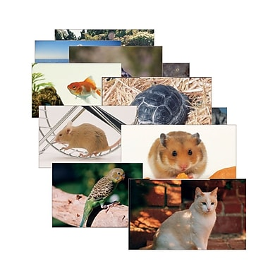 Real Life Learning, Pets Posters Set