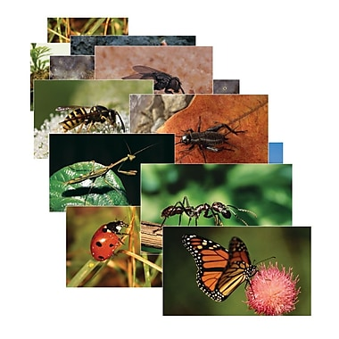 Real Life Learning, Insects Posters Set