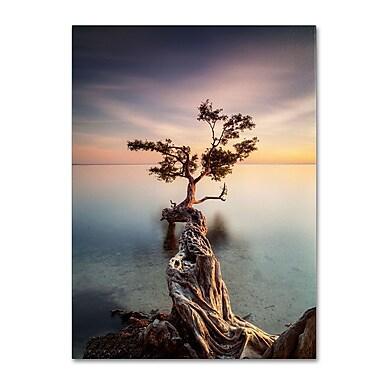 Trademark Fine Art 'Water Tree III' 22