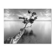 "Trademark Fine Art 'Water Tree XIII' 22"" x 32"" Canvas Art"