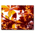 Trademark Fine Art 'Light Coming Through Tree Leaves' 18in. x 24in. Canvas Art
