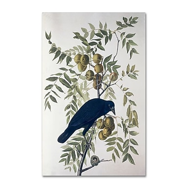Trademark Fine Art 'American Crow' 35