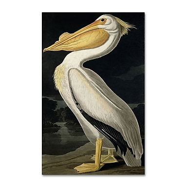 Trademark Fine Art 'American White Pelican' 30