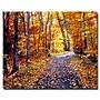 Trademark Fine Art 'Leaf Covered Road' 26 x