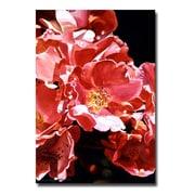 "Trademark Fine Art 'Wild Roses' 16"" x 24"" Canvas Art"