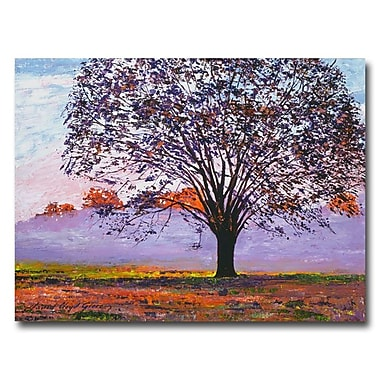 Trademark Fine Art 'Majestic Tree in Morning Mist' 35