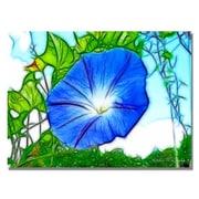 "Trademark Fine Art 'Heavenly Blue Morning Glory' 22"" x 32"" Canvas Art"