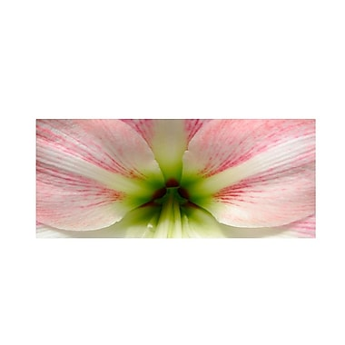 Trademark Fine Art 'Amazing Amaryllis' 14