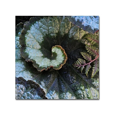 Trademark Fine Art 'Escargot Begonia and Fern' 24