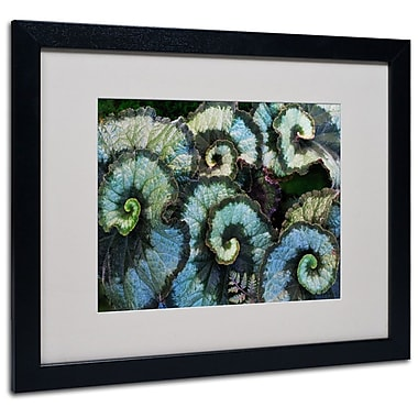 Trademark Fine Art 'Escargot Begonia' 16