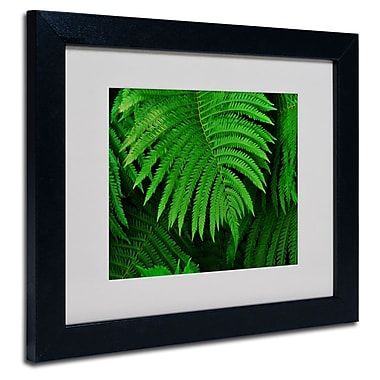 Trademark Fine Art 'Healing Ferns' 11