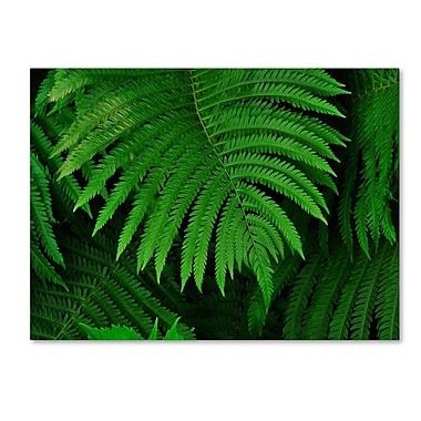 Trademark Fine Art 'Healing Ferns' 14