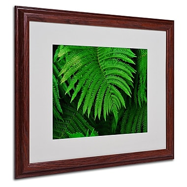 Trademark Fine Art 'Healing Ferns' 16